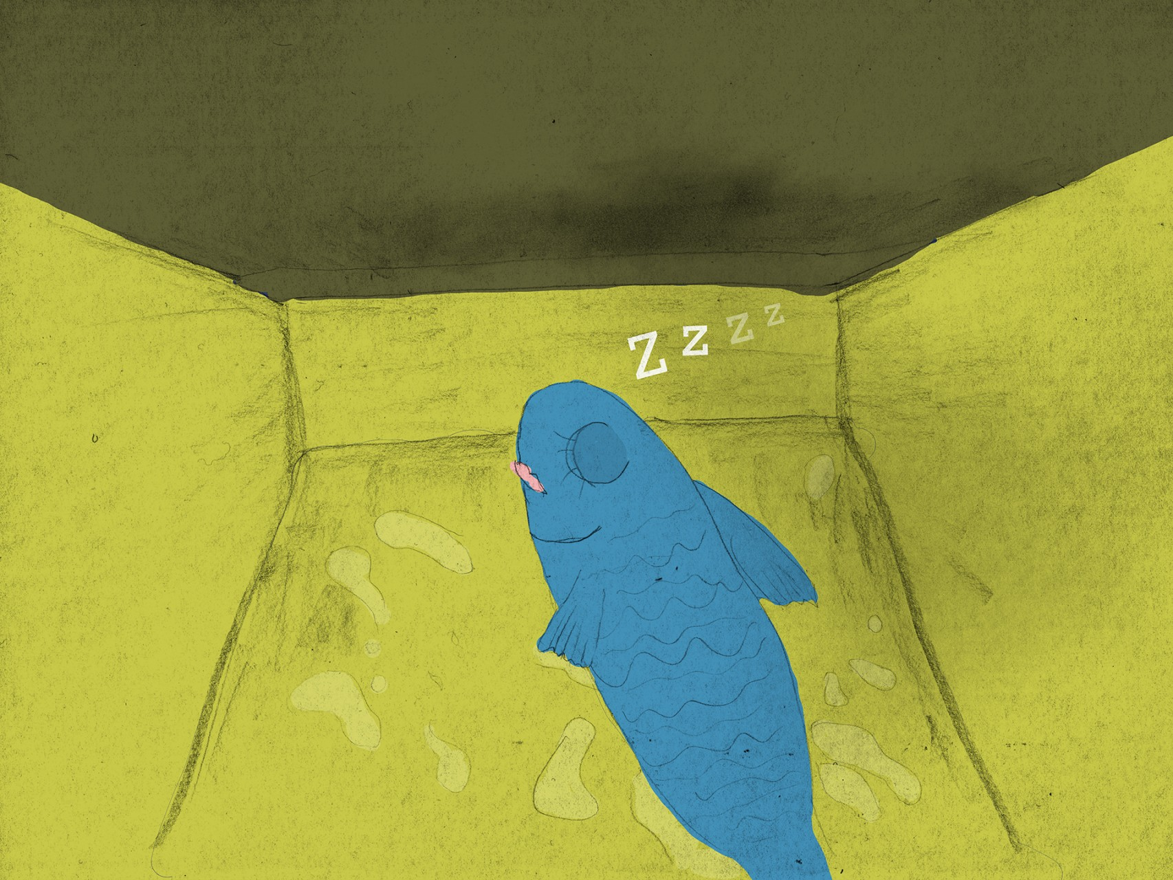 page 18f - snooze in tin