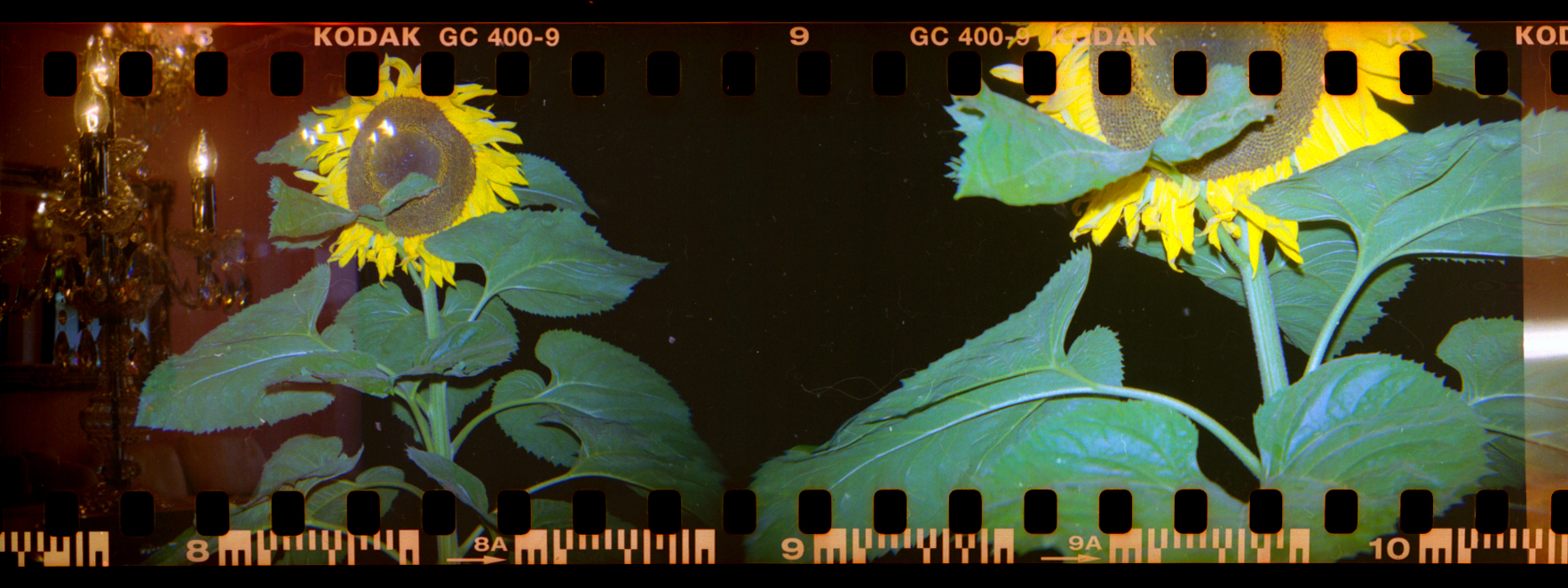 plastic film strips